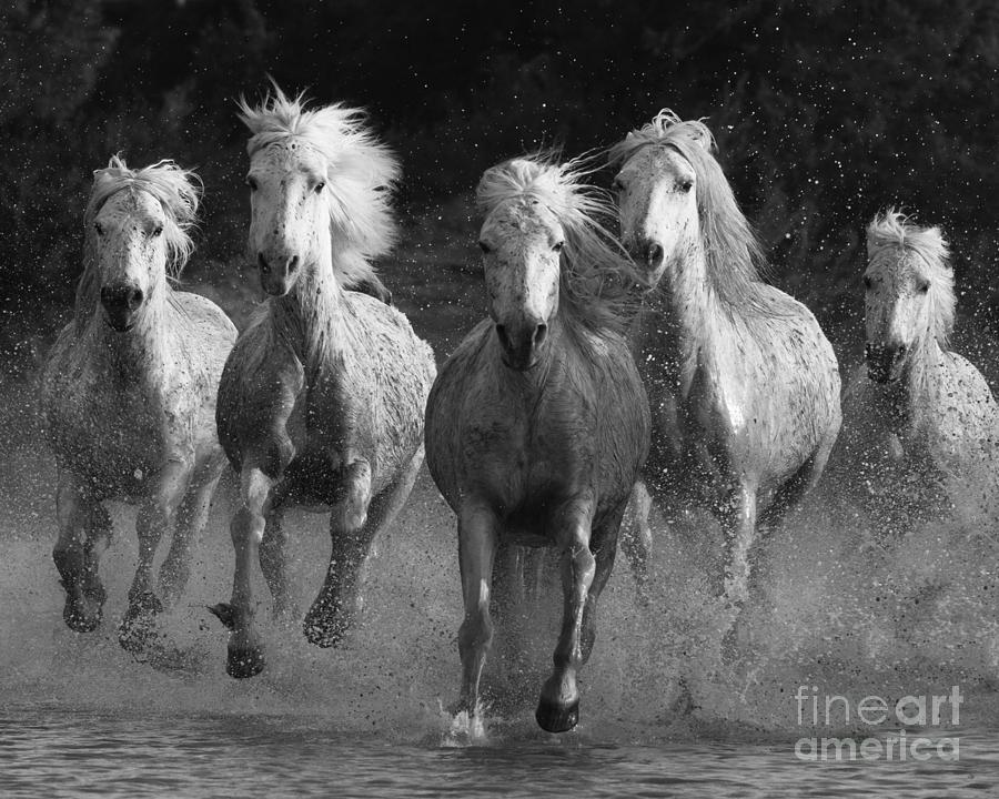 Camargue Horses Running Photograph By Carol Walker