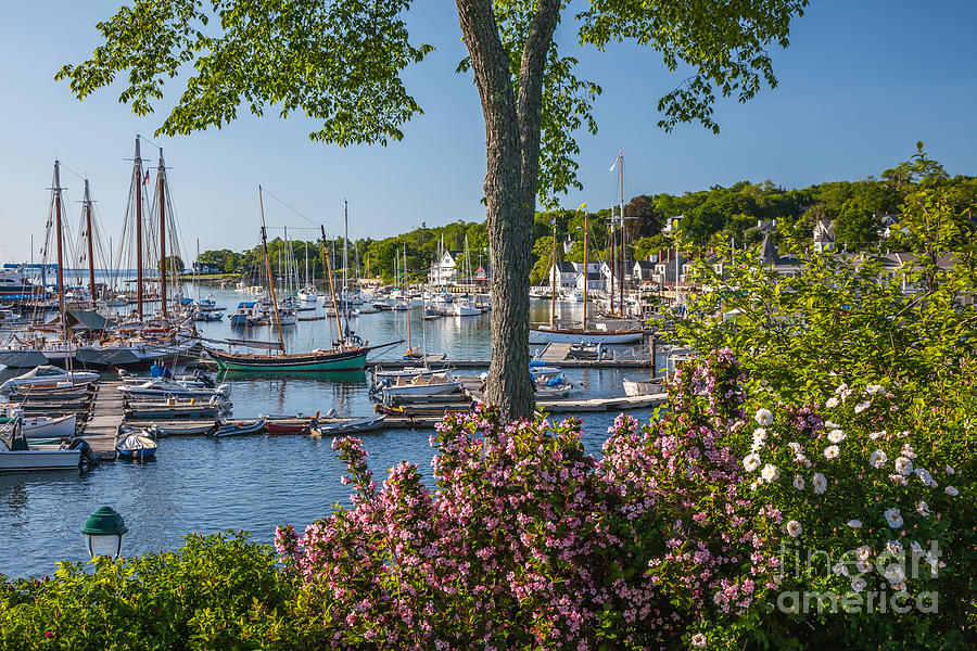 America Photograph - Camden Harbor Spring by Susan Cole Kelly