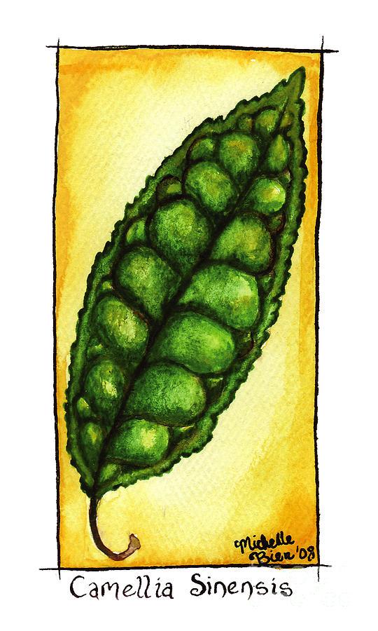 Camellia Sinensis Leaf by Michelle Bien