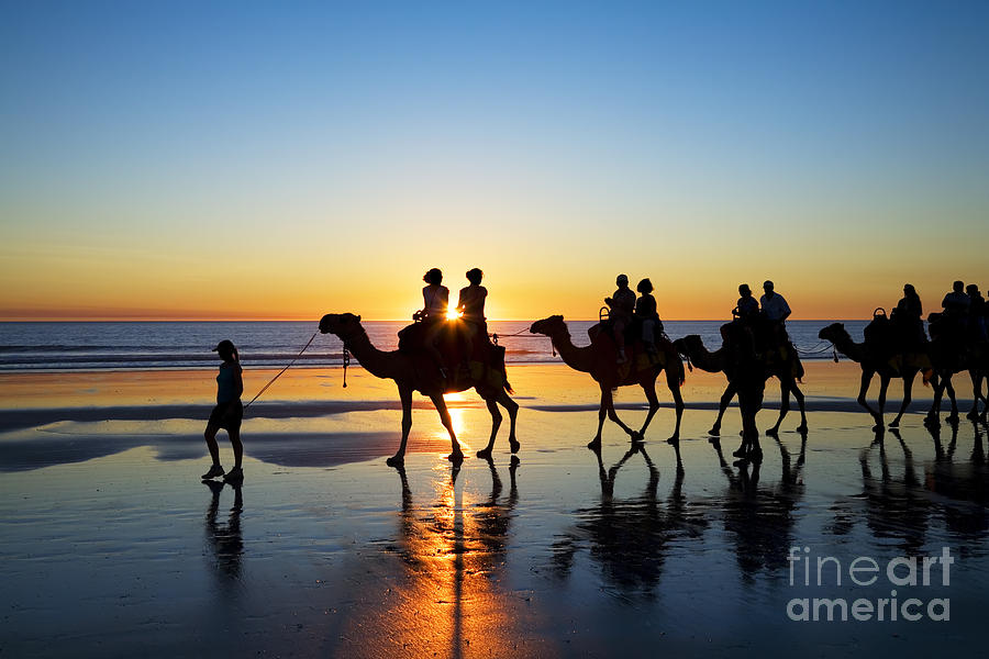 Australia Photograph - Camels On The Beach Broome Western Australia by Colin and Linda McKie