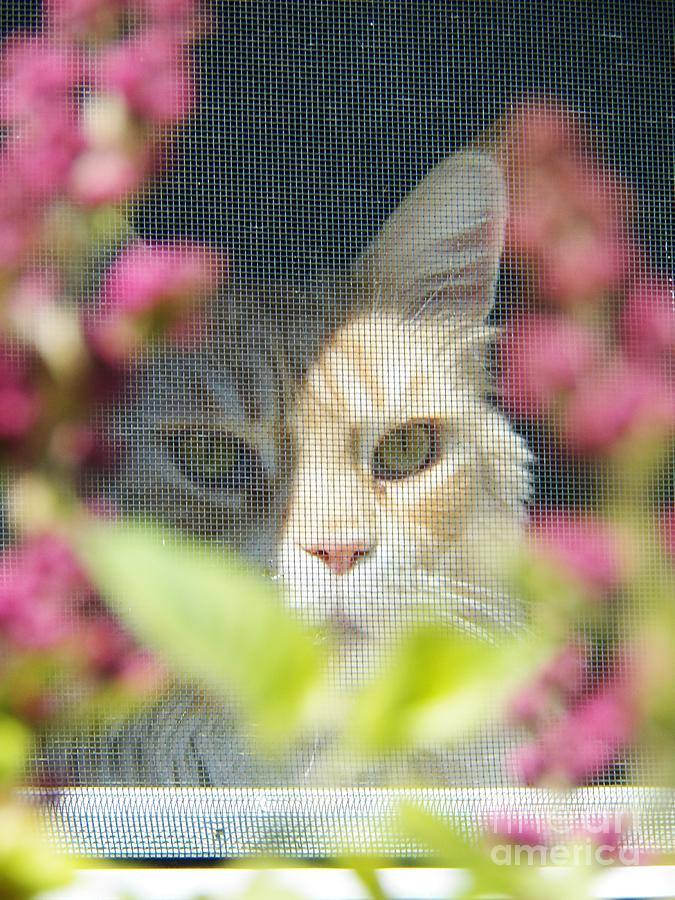 Cat Painting - Cameo Peeking Through The Screen by Judy Via-Wolff