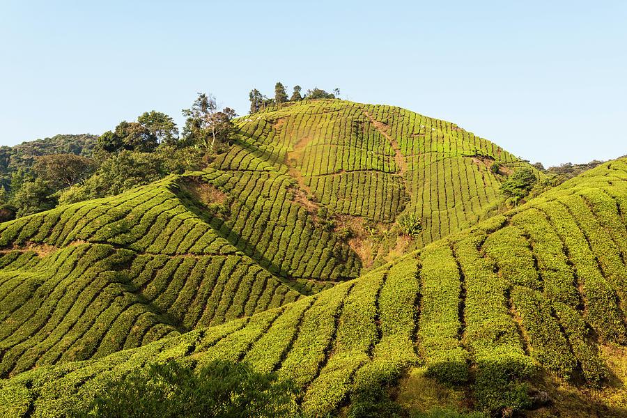 Cameron Highlands, Malaysia Photograph by John Harper