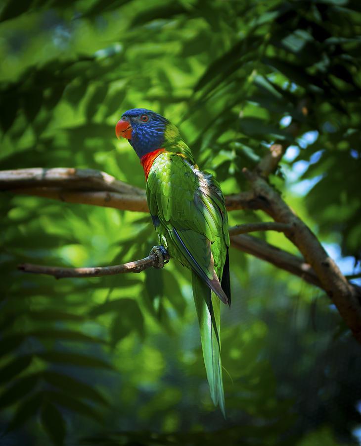 Camo Macaw by Wayne Stacy