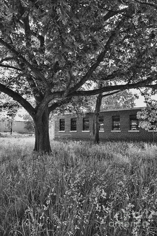 Bowmanville Photograph - Camp 30 Number 4 by Steve Nelson