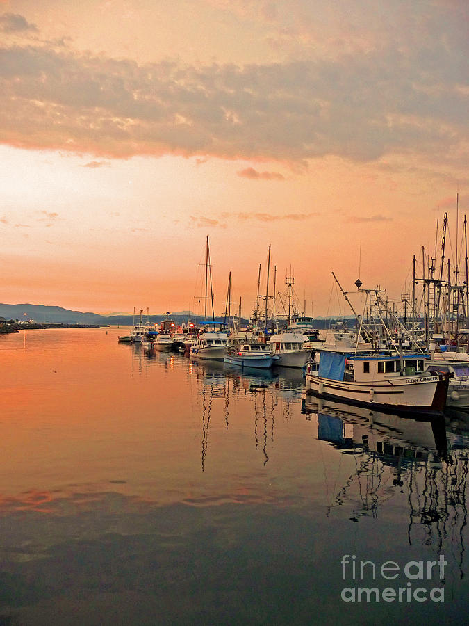 Campbell Photograph - Campbell River Marina by Nancy Harrison