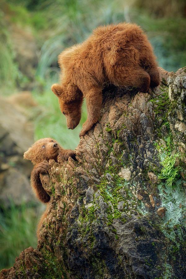 Bear Photograph - Can You Help Me? by Sergio Saavedra Ruiz