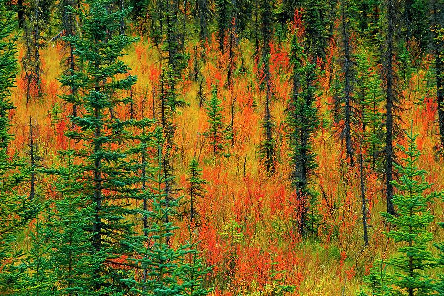 Alberta Photograph - Canada, Alberta Autumn In A Meadow by Jaynes Gallery