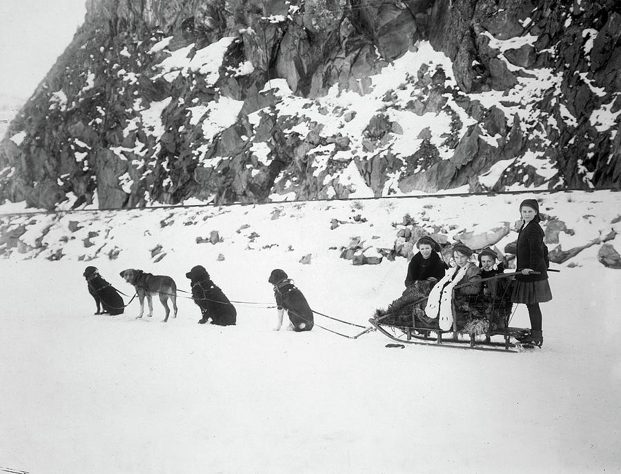 1910 Photograph - Canada Dog Sled, C1910 by Granger