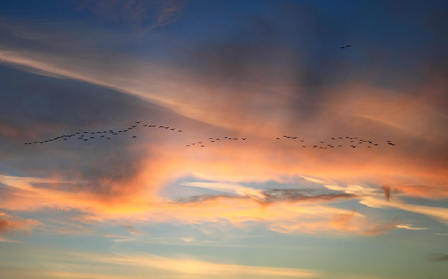 Sunset Photograph - Canada Goose Flock Sunset by John Burk