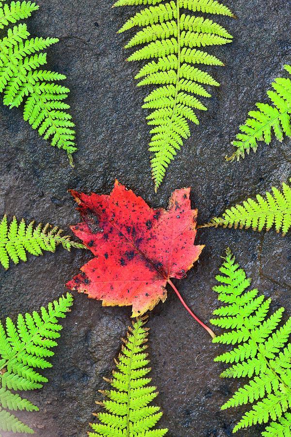 Autumn Photograph - Canada, Nova Scotia, Cape Breton, Eight by Patrick J. Wall