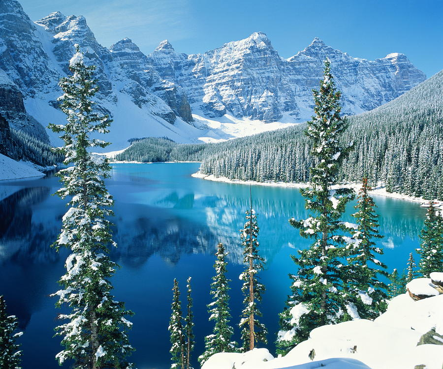 Canada Alberta Banff National Park Moraine Lake And Snow Covered Tree