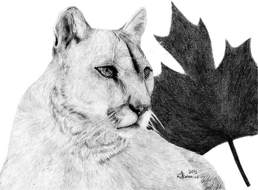 Cougar Drawing - Canadian Cougar by Kayleigh Semeniuk