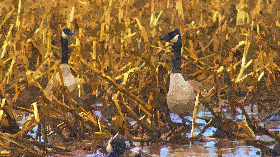 Canadian Geese Corn Field  Painting by Rosemarie E Seppala