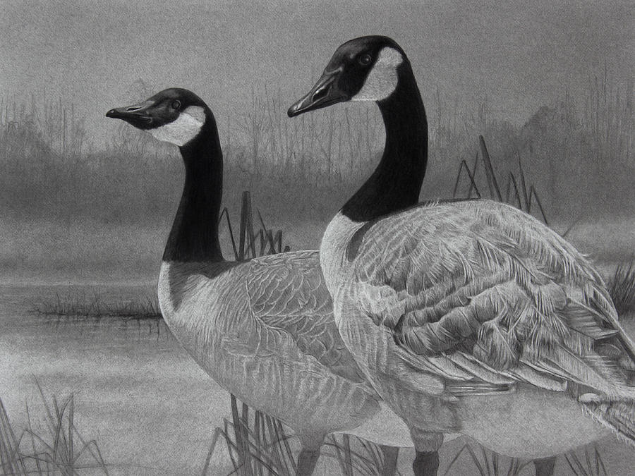 Graphite Drawing Drawing - Canadian Geese by Tim Dangaran