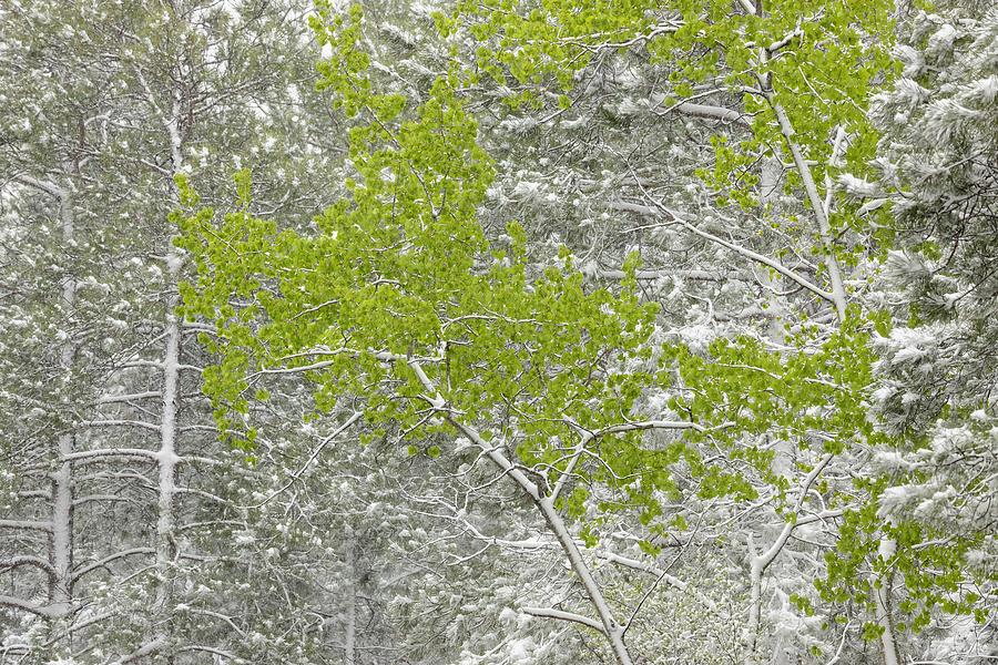 Canadian Spring Landscape  by Don Johnston