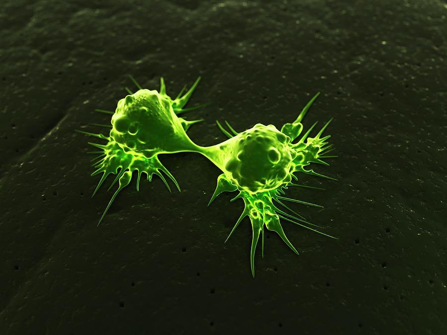 Cancer Cells Dividing, Artwork Digital Art by Sciepro