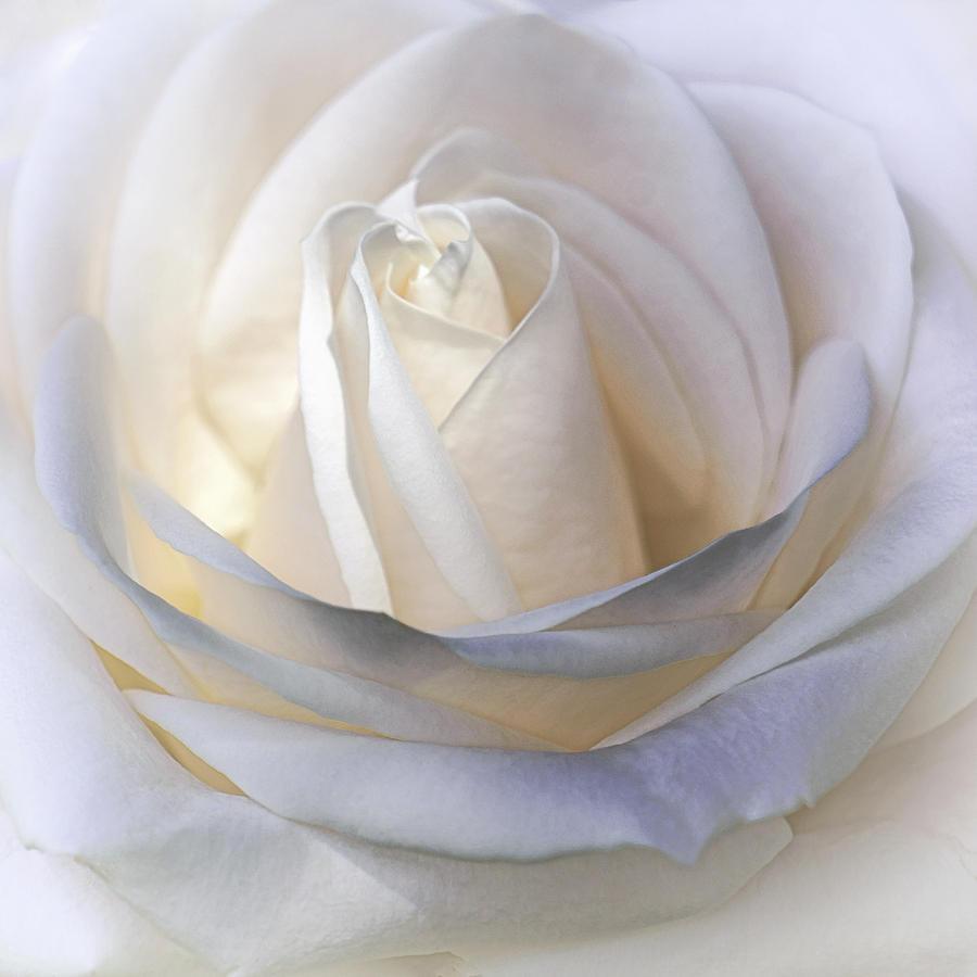 Floral Photograph - Candlelight by Darlene Kwiatkowski