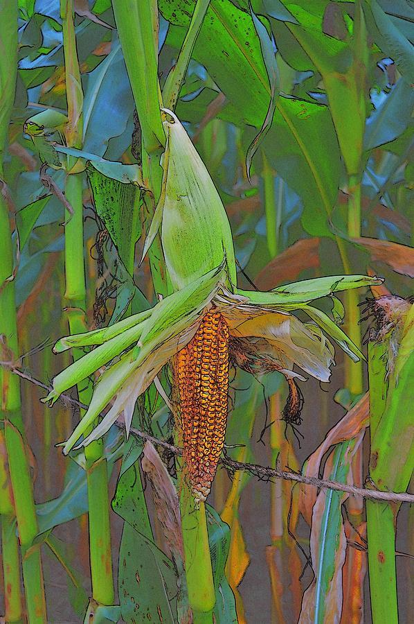 Corn Photograph - Candy Corn by Thomas  MacPherson Jr