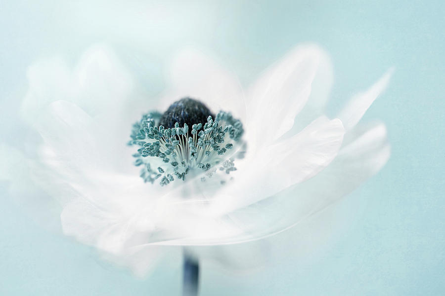 Teal Photograph - Candy Floss by Jacky Parker