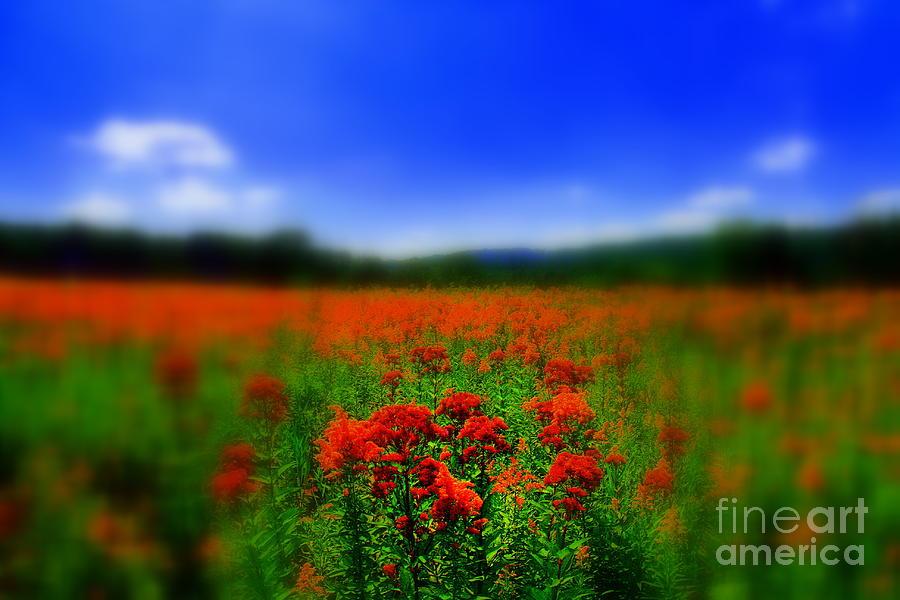Field Of Flowers Photograph - Candyland by Neal Eslinger