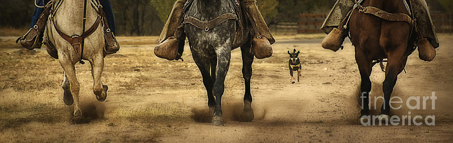 Canine Verses Equine Photograph