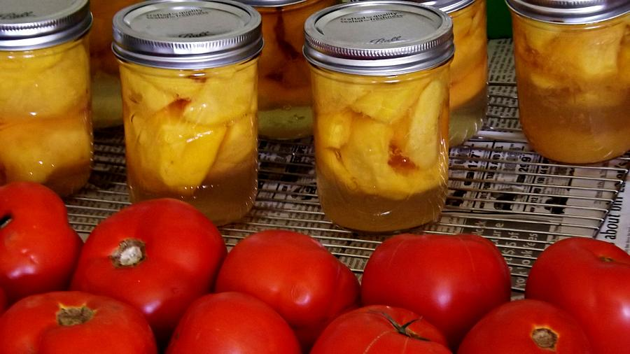 Canning Photograph - Canning Season by Michael Sokalski