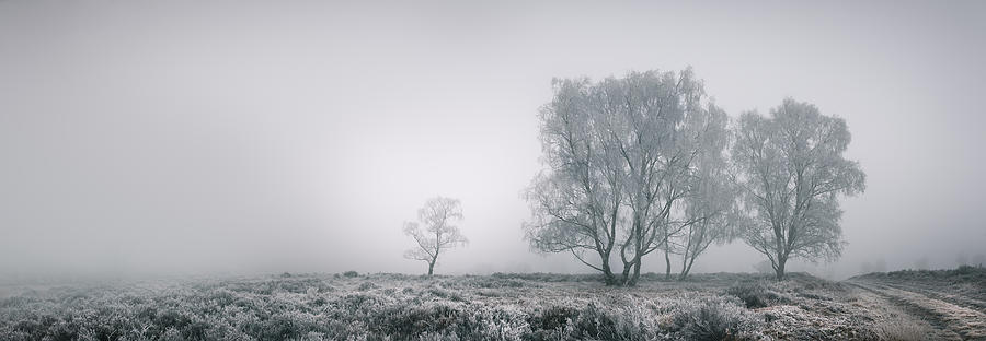 Frost Photograph - Cannock Chase by Andy Astbury