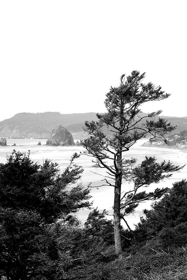 Black And White Photograph - Cannon Beach by David Patterson
