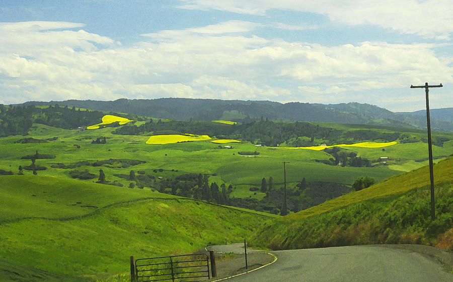 Canola Photograph - Canola Country Road by Anne Mott
