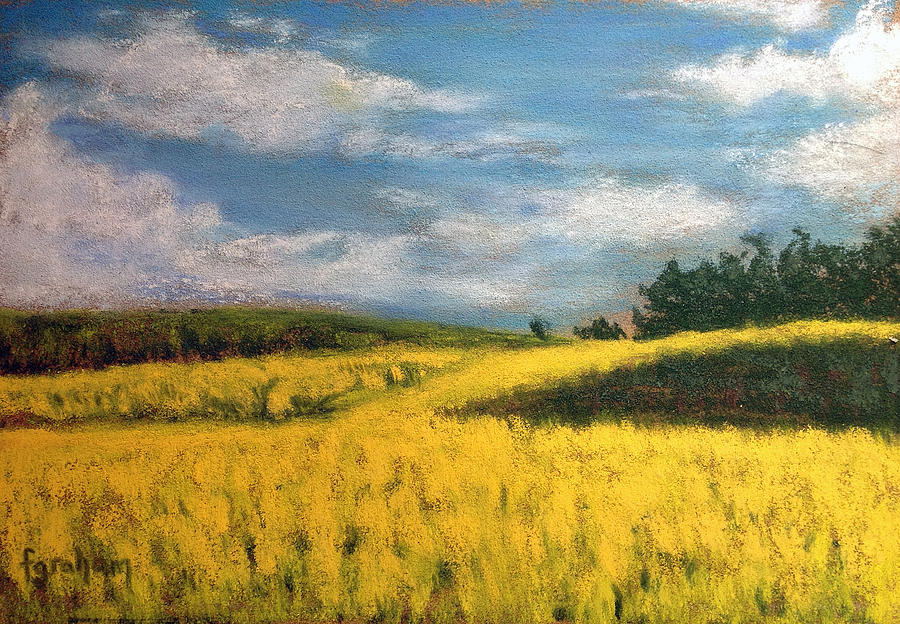 Canola Pastel - Canola Fields In Rimbey Alberta by Fiona Graham
