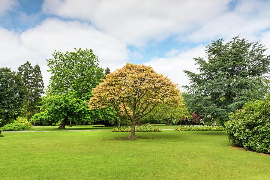 Canon Hill Park, Birmingham, England, Uk Photograph by Chris Hepburn