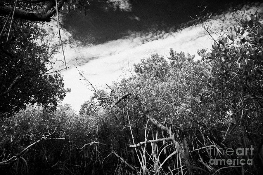 Florida Photograph - Canopy Of The Mangrove Forest In The Florida Everglades Usa by Joe Fox