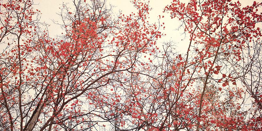 Red Photograph - canopy trees II by Priska Wettstein