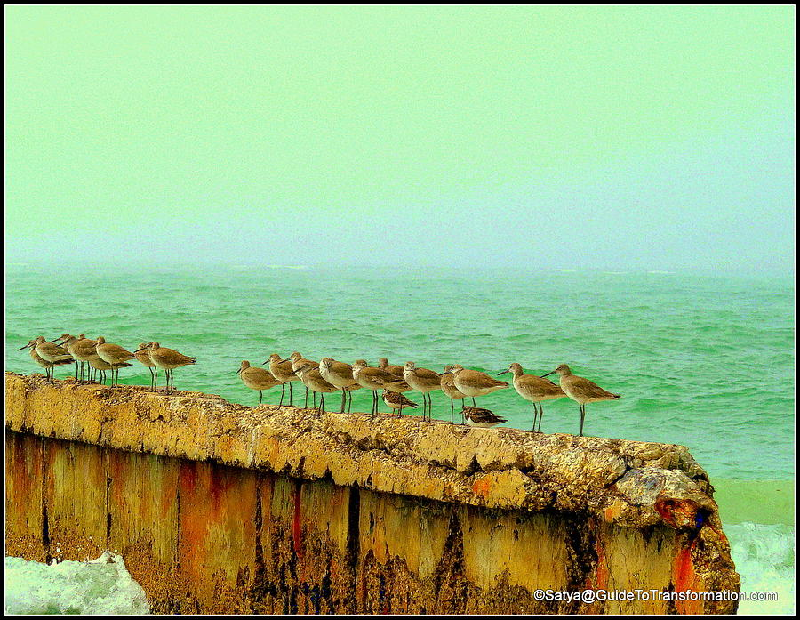 Birds Photograph - Cant Go Yet Ralphs Still Sitting by Satya Winkelman