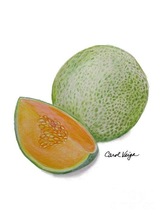 Cantaloupe Drawing : Over 1,986 cantaloupe pictures to choose from, with no signup needed.
