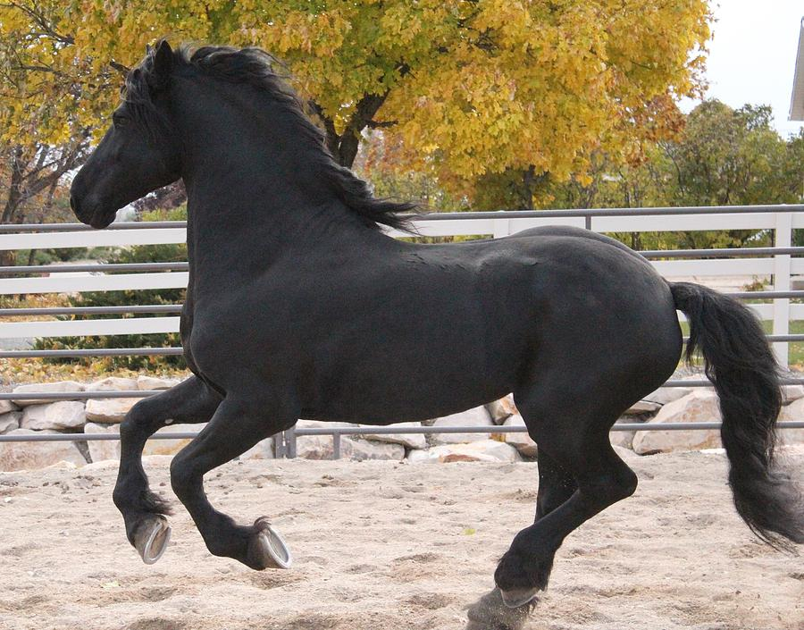 Canter In Spirit Photograph by Royal Grove Fine Art