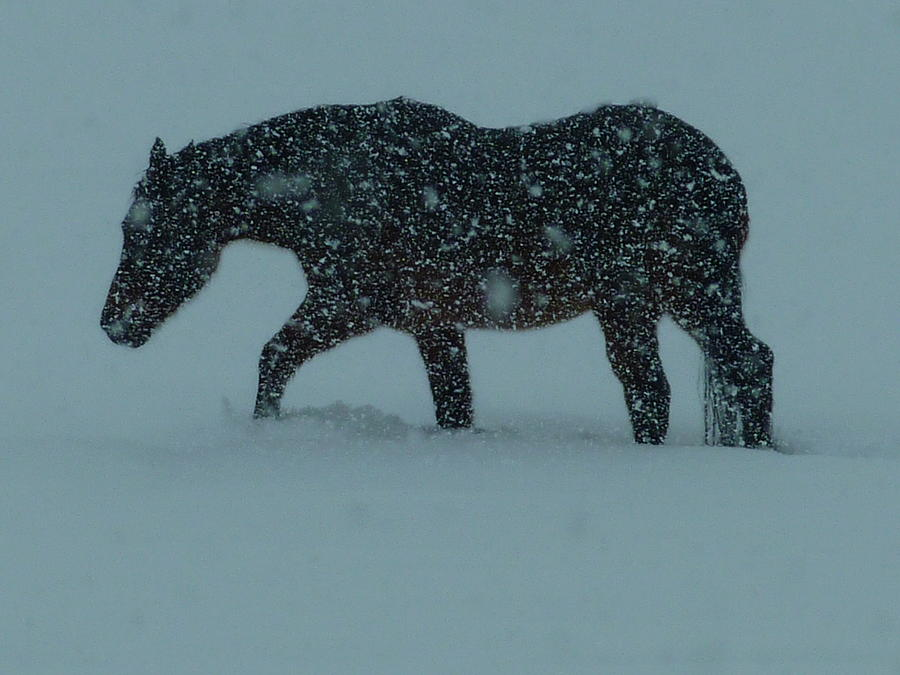 Horse Photograph - Cant..wait..till..spring..  by Gerry Childs