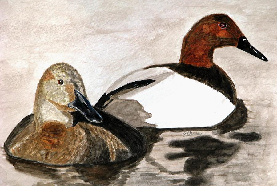 Canvasback Ducks Painting - Canvasback Couple by Angela Davies