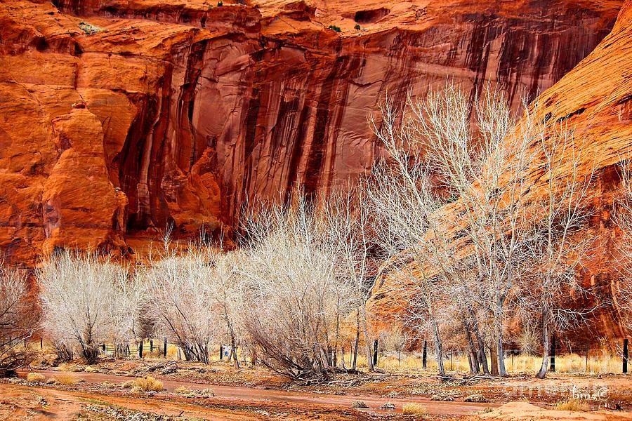 Canyons Photograph - Canyon De Chelly - Spring II by Barbara Zahno