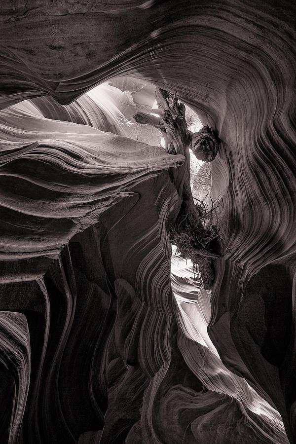 Canyon Driftwood by Brad Brizek