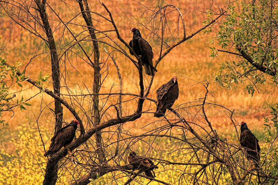 Canyon Dwellers Photograph by Joe Bledsoe
