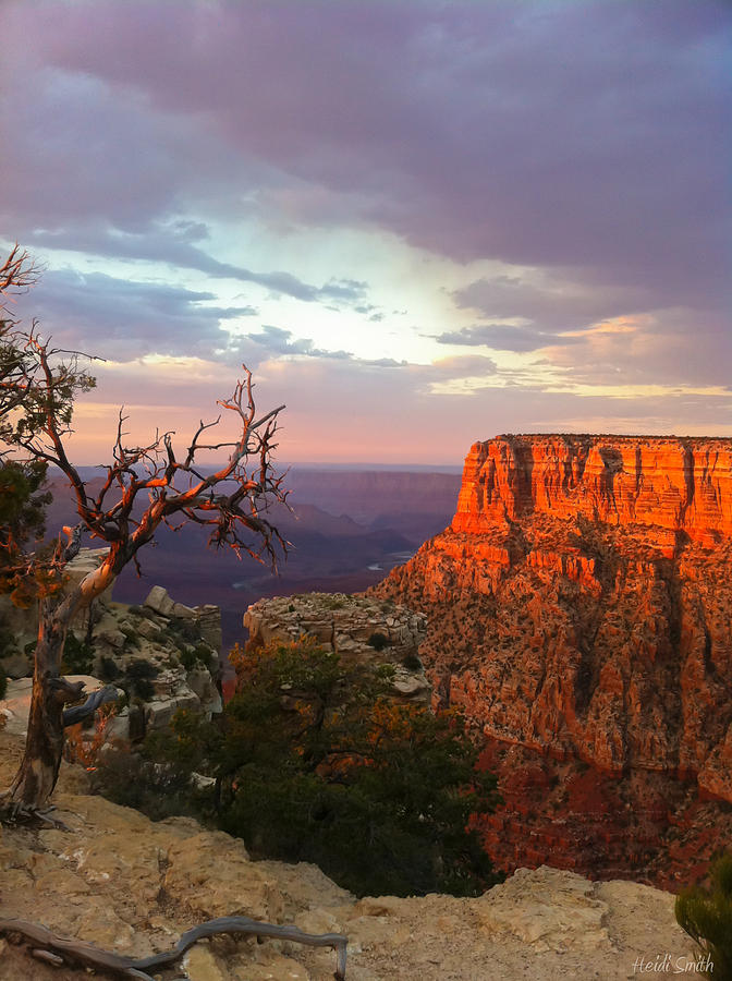 America Photograph - Canyon Rim Tree by Heidi Smith