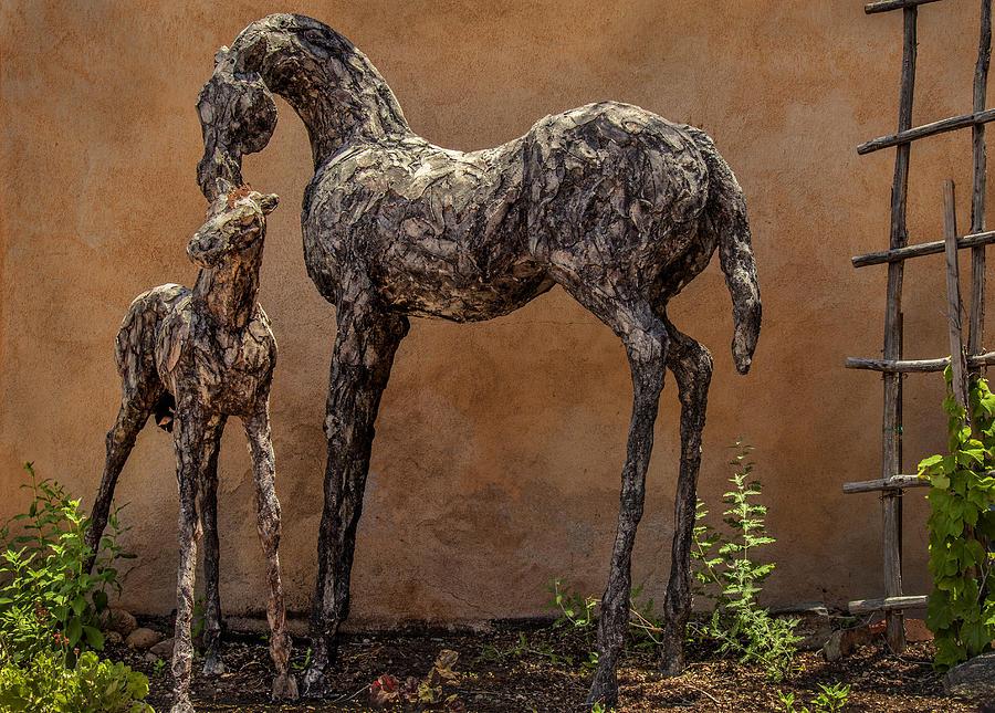 Canyon Road Horses Photograph