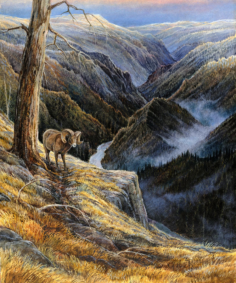 Bighorn Sheep Painting - Canyon Solitude by Steve Spencer