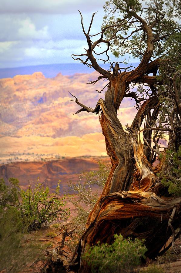 Tree Photograph - Canyon Vista 1 by Marty Koch