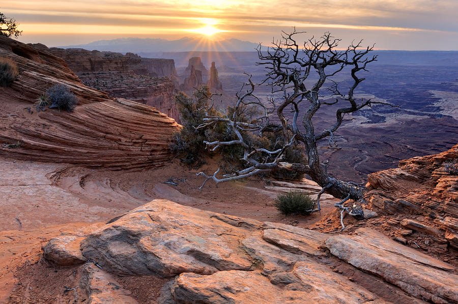 Rock Photograph - Canyonlands Sunrise Landscape With Dry Tree by Yevgen Timashov