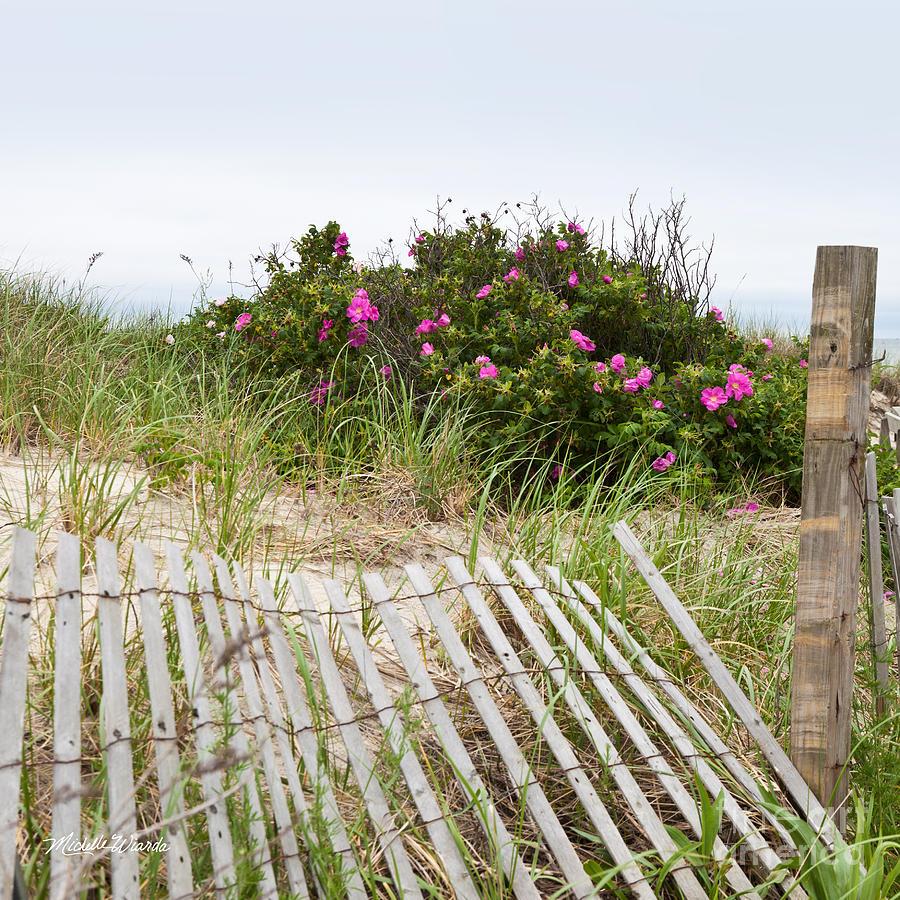 Cape Cod Rose Part - 36: Landscape Photograph - Cape Cod Beach Roses By Michelle Wiarda-Constantine