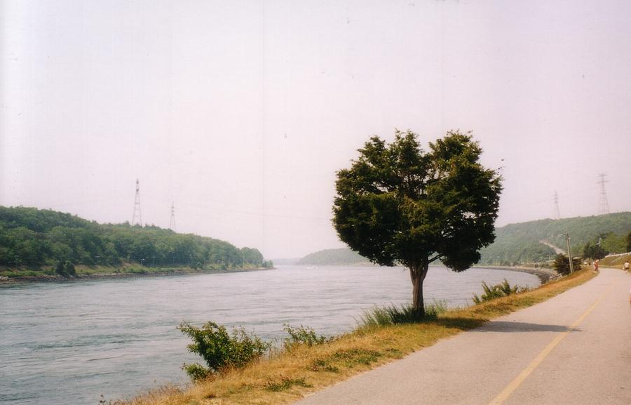 Massachusetts Photograph - Cape Cod Canal And Tree by David Fiske