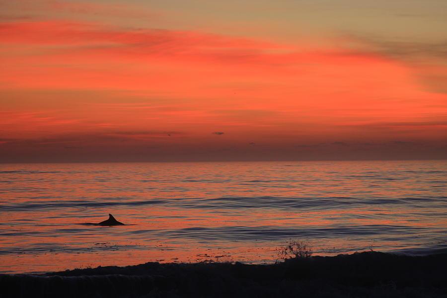 Cape Hatteras Dolphin 2 Photograph