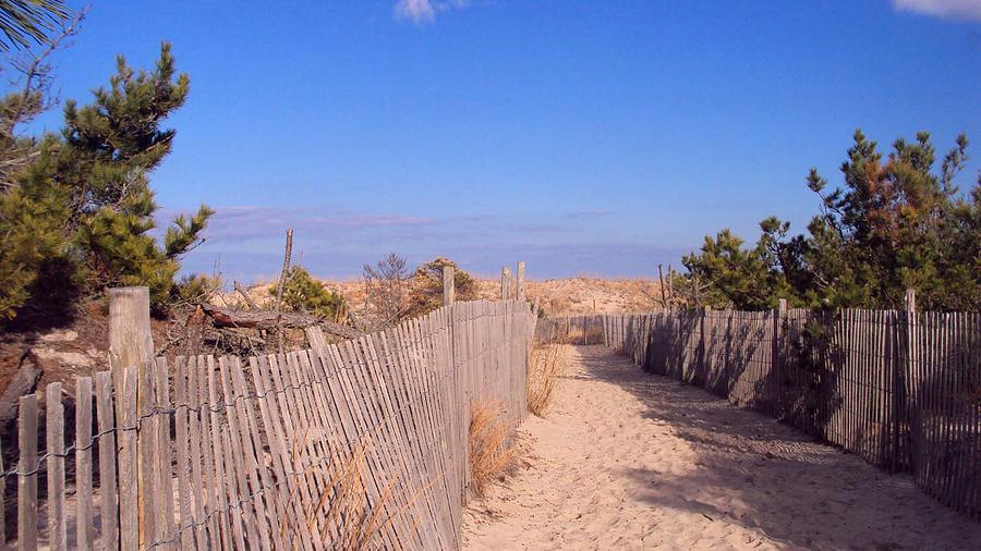 Beach Photograph - Cape Henlopen 1 by Cynthia Harvey